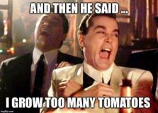 too many tomatoe