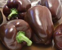 Chocolate-Bell-Pepper-Seeds